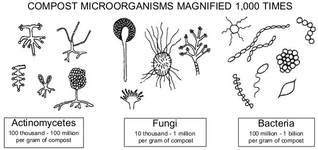 permaculture compost microorganisms